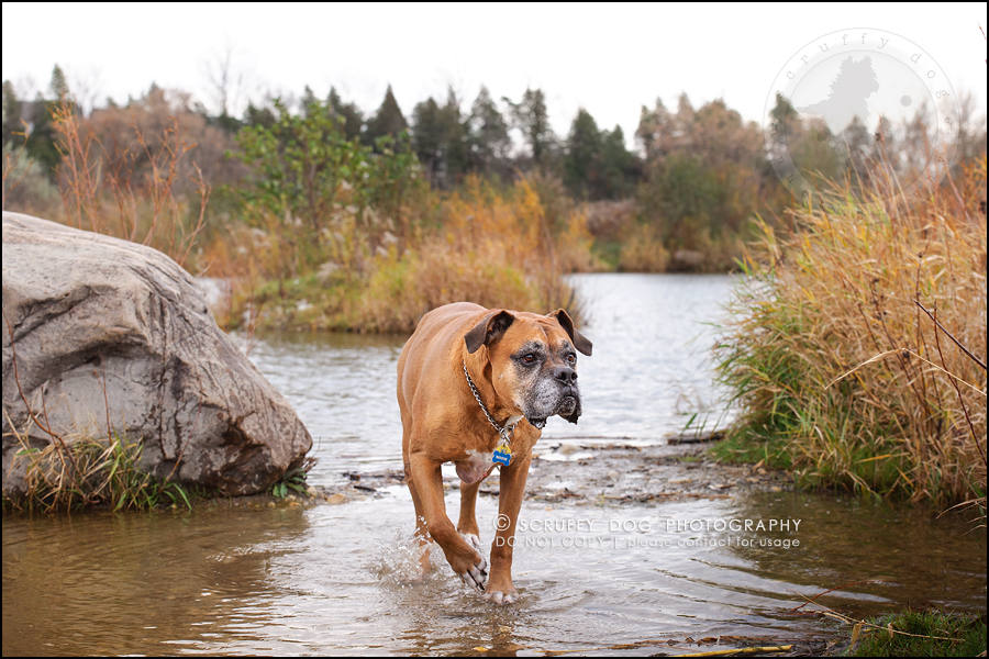 06-brampton-ontario-best-professional-dog-photographer-moose rocket-184