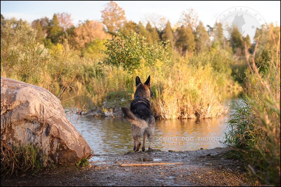 06-toronto-ontario-best-professional-pet-photographer-maya blitz-1594