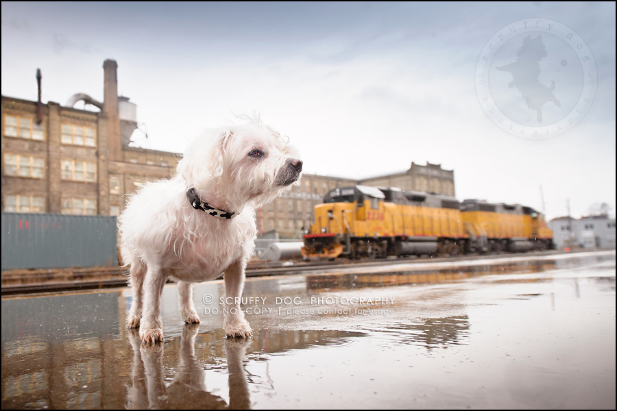 06-toronto-ontario-best-professional-pet-photographer-mika bobby worton-303