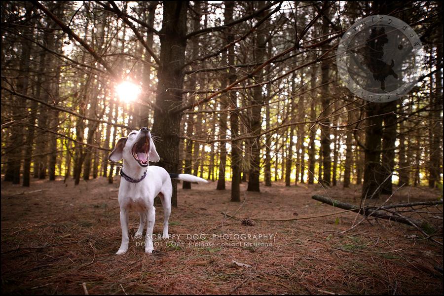 06-toronto-ontario-professional--dog-photographer-lucy frederick-156