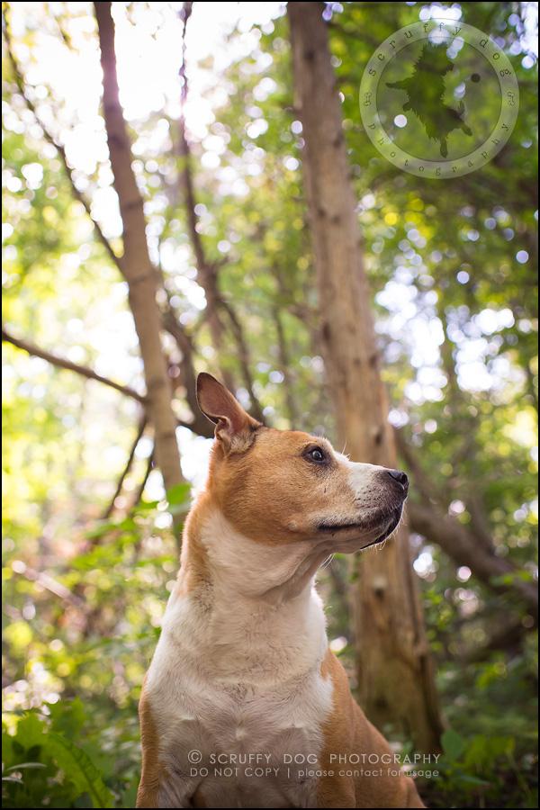 06-toronto-ontario-professional-pet-photographer-jade perry-66