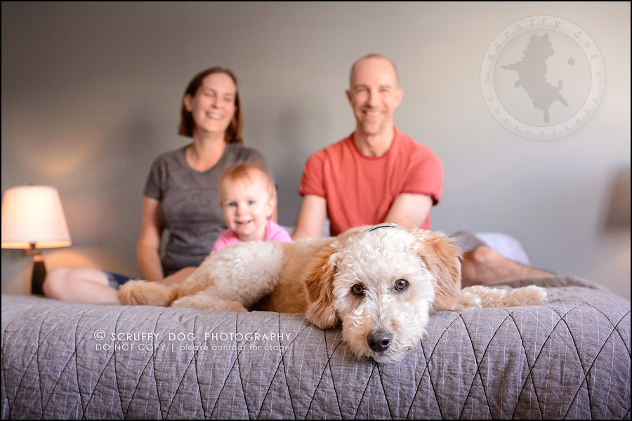 06-waterloo-ontario-dog-stock-photography-gulliver george-109