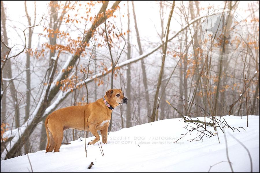 06-waterloo-ontario-professional--dog-photographer-best-makeda slinger-103