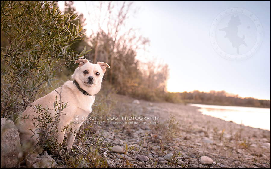 06-waterloo-ontario-professional-dog-photographer-best-max rooke-161