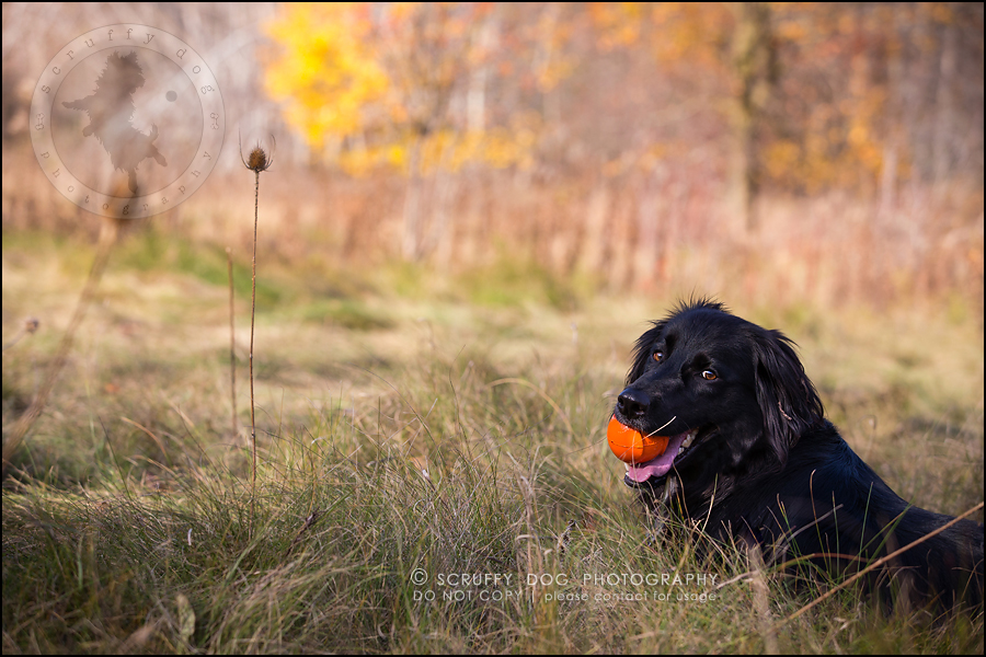 06-waterloo-ontario-professional-dog-photographer-hudson manning-208