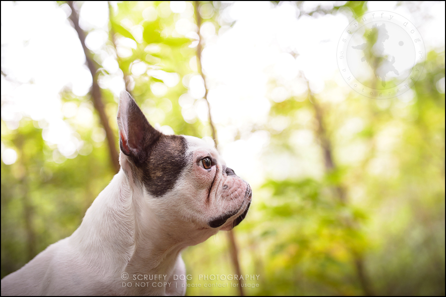 06_guelph_ontario_pet_photographer_best_dog_oliver eleanor fleming-32