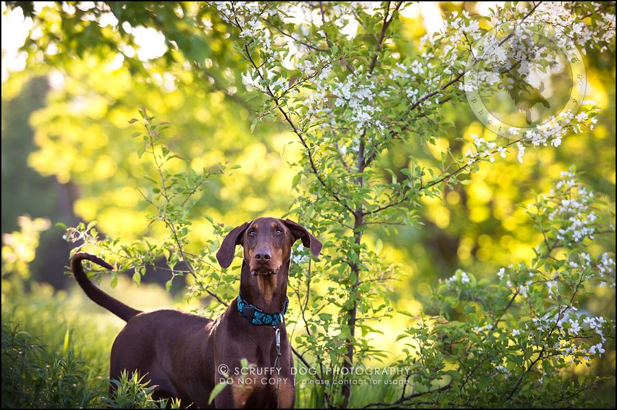 06_guelph_ontario_pet_photographer_best_dog_reese hunsberger-245