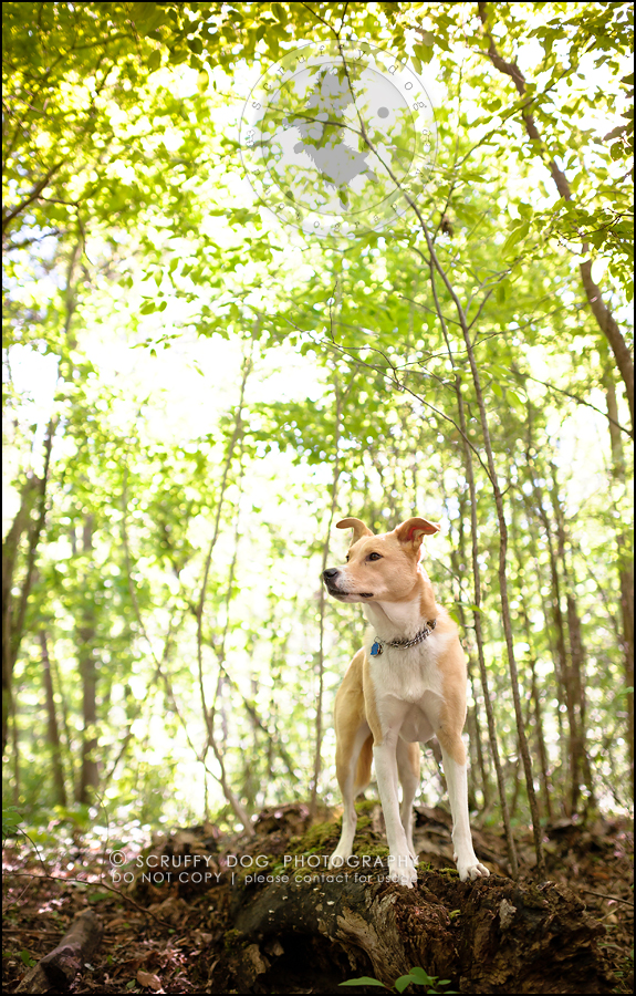 06_hamilton_ontario_pet_photographer_best_dog_remi kona pepper shaw-46