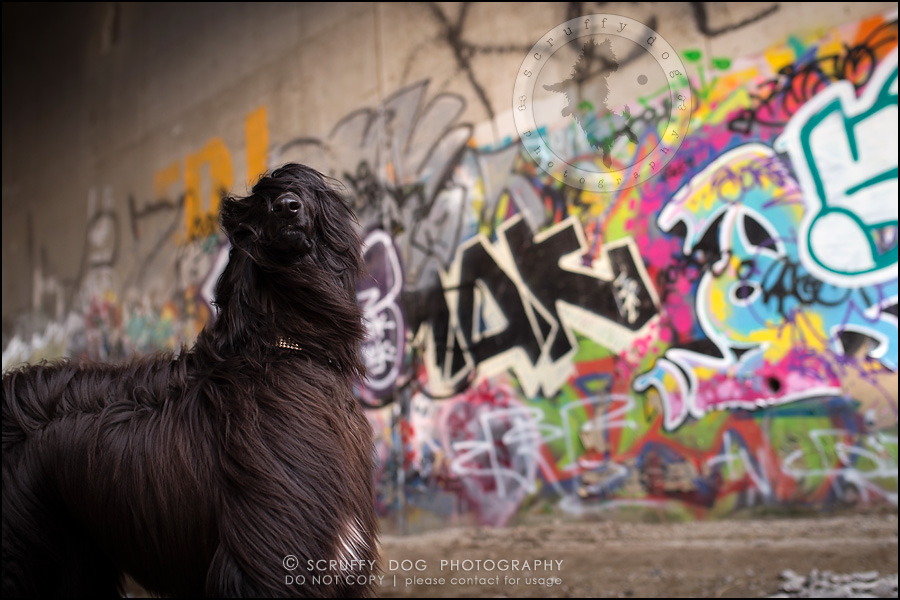 06_ontario_dog_stock_photography_dwss-76