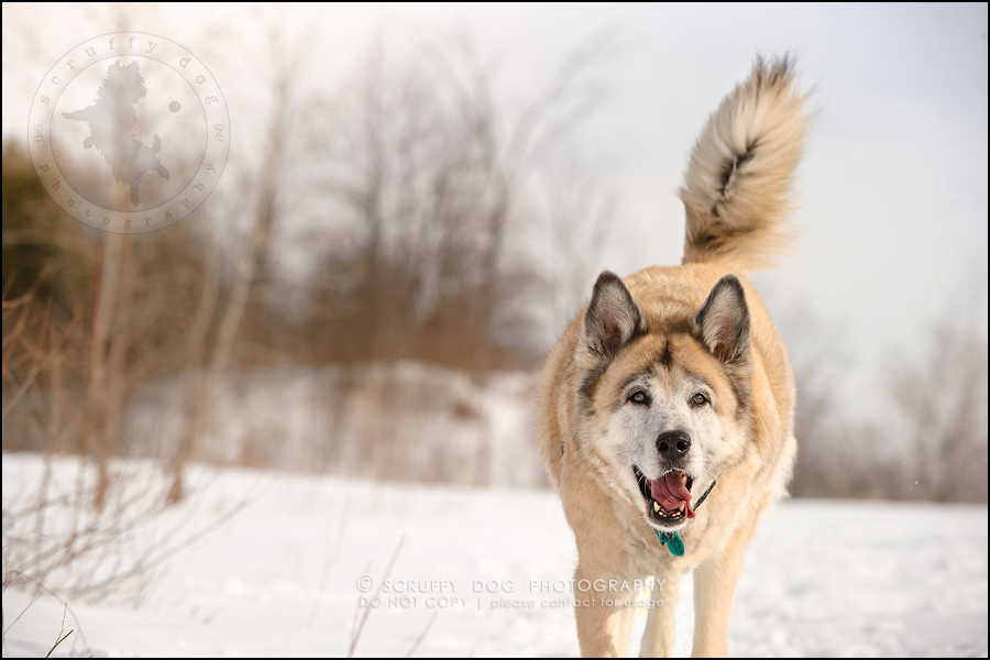 06_toronto_ontario_dog_stock_photography_grace zoe carr-124-Edit