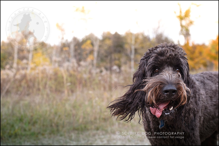06_waterloo_ontario_best_pet_photographer_murphy odonovan-357