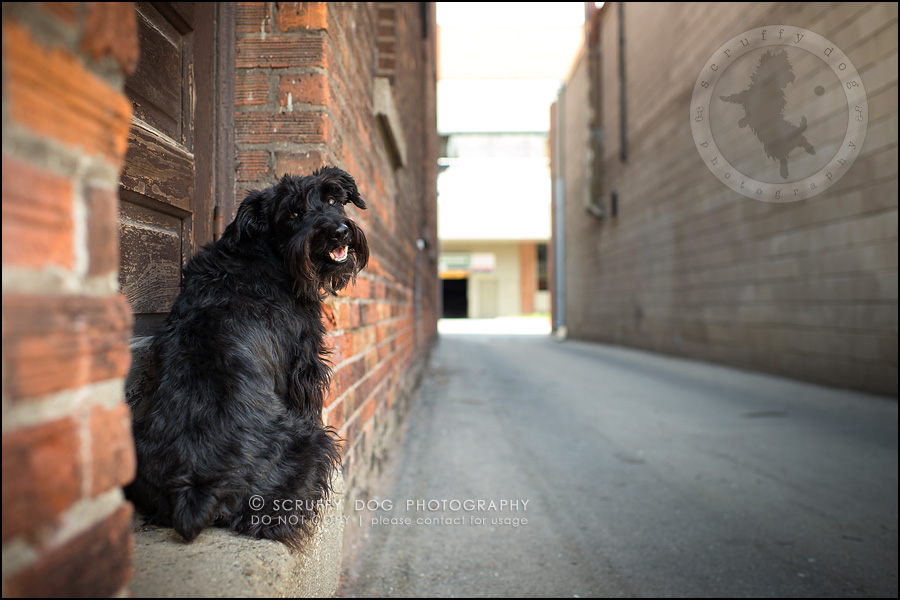 06toronto_ontario_dog_stock_photography_geordi jessie ladrillo-87