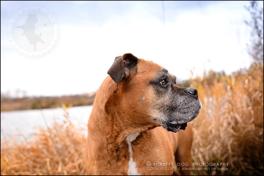 07-brampton-ontario-best-professional-dog-photographer-moose rocket-576