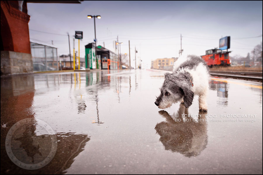 07-toronto-ontario-best-professional-pet-photographer-mika bobby worton-310