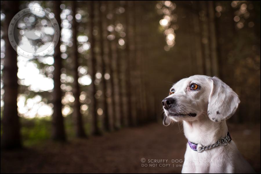 07-toronto-ontario-professional--dog-photographer-lucy frederick-107