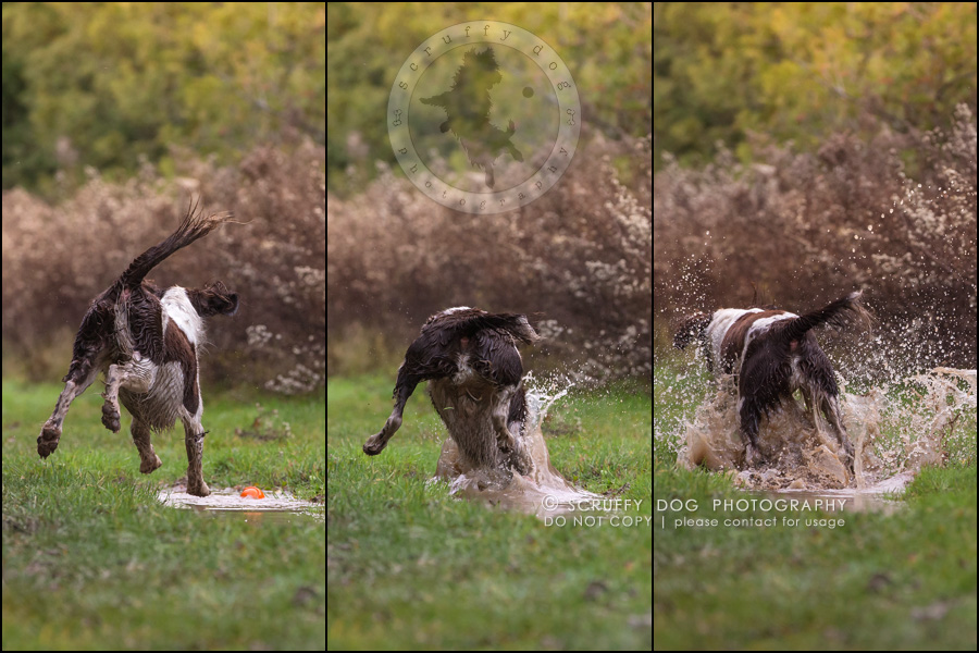 07-toronto-ontario-professional-pet-dog-photographer-mud triptych2