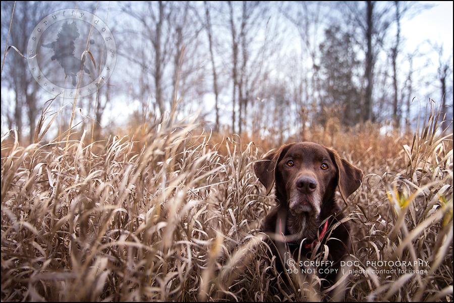 07-waterloo-ontario-best-professional-dog-photographer-max shoup-150