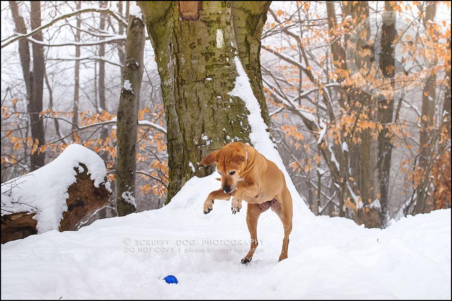 07-waterloo-ontario-professional--dog-photographer-best-makeda slinger-117