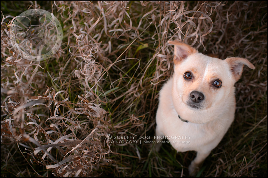 07-waterloo-ontario-professional-dog-photographer-best-max rooke-220-Edit