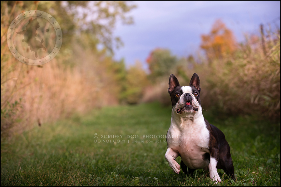 07_kitchener_ontario_pet_photographer_best_dog_princess dot carroll-183