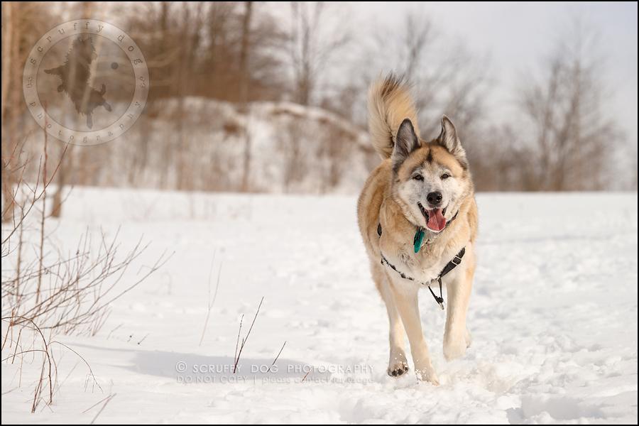 07_toronto_ontario_dog_stock_photography_grace zoe carr-86