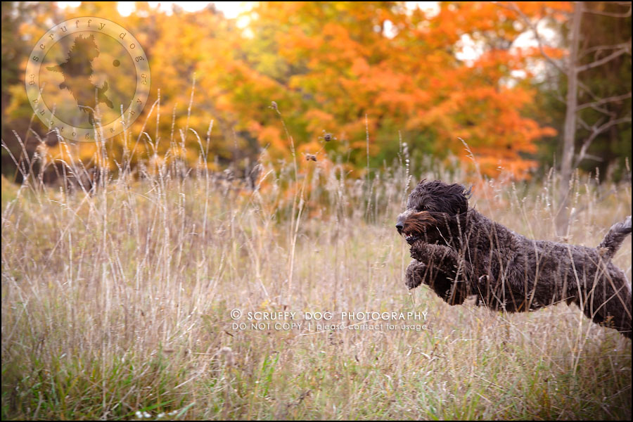 07_waterloo_ontario_best_pet_photographer_murphy odonovan-278