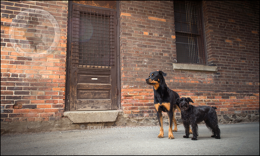 07toronto_ontario_dog_stock_photography_geordi jessie ladrillo-148