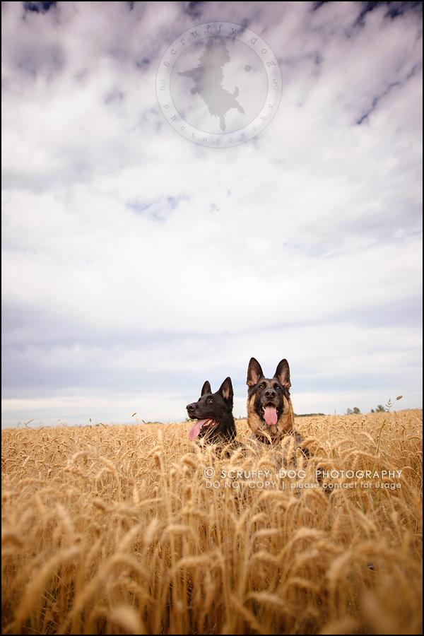 08-toronto-ontario-best-professional-pet-photographer-maya blitz-547