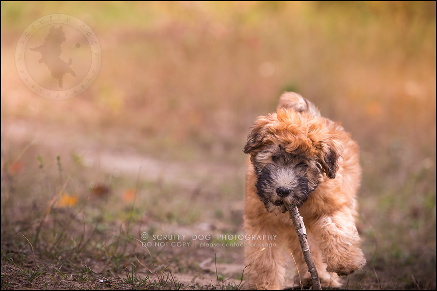 08-toronto-ontario-best-professional-pet-photographer-milford giza-213