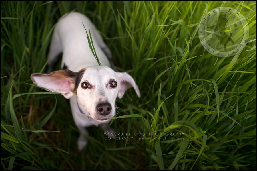 08-toronto-ontario-professional--dog-photographer-lucy frederick-346
