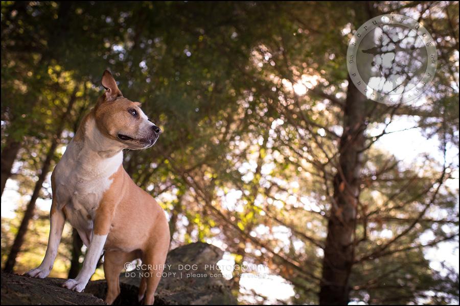 08-toronto-ontario-professional-pet-photographer-jade perry-125