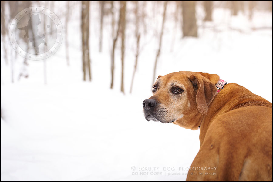 08-waterloo-ontario-professional--dog-photographer-best-makeda slinger-11
