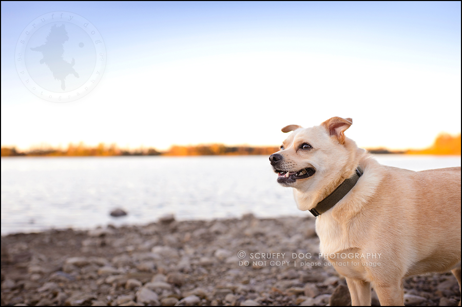 08-waterloo-ontario-professional-dog-photographer-best-max rooke-122