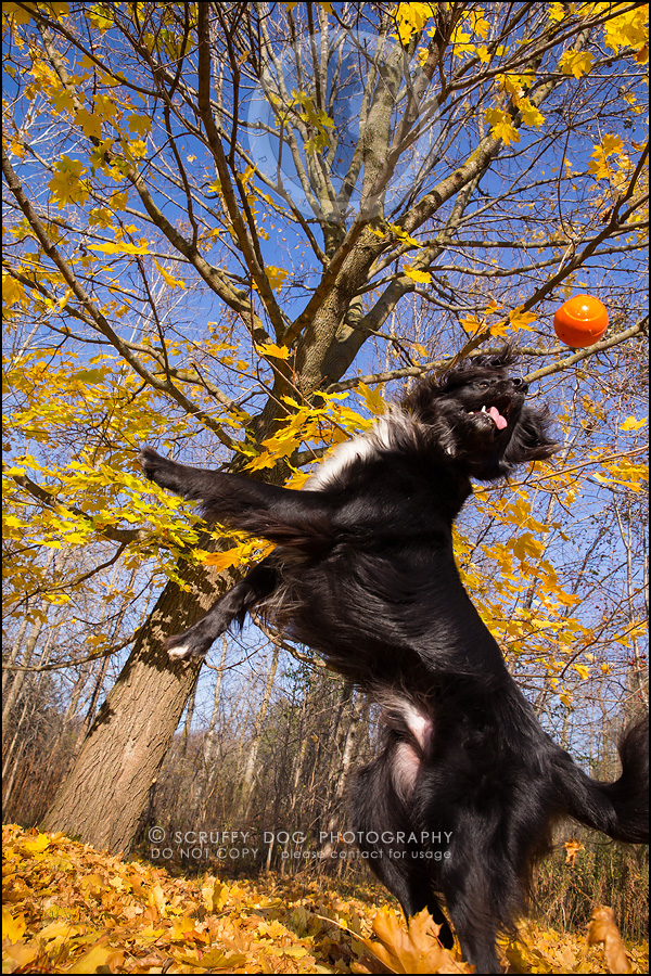 08-waterloo-ontario-professional-dog-photographer-hudson manning-321