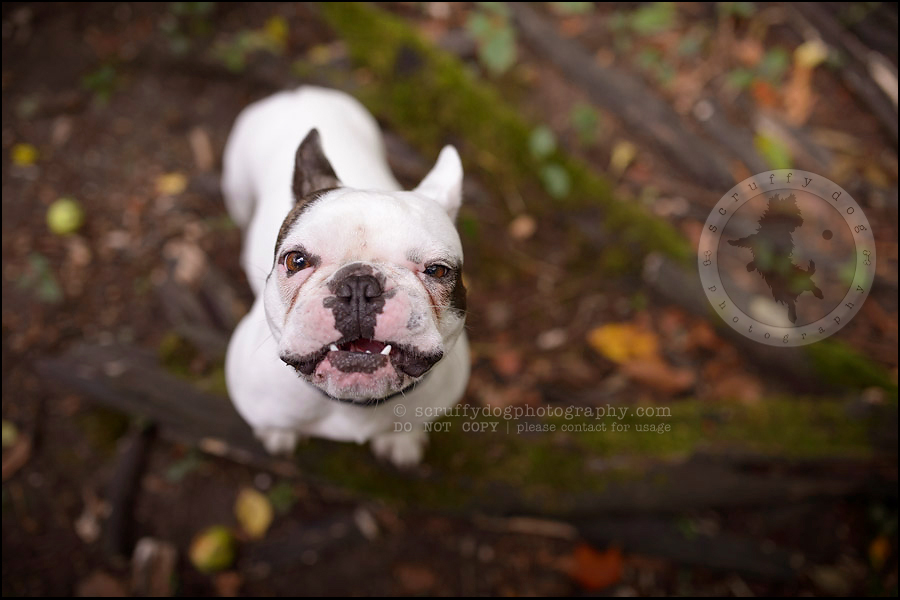 08_guelph_ontario_pet_photographer_best_dog_oliver eleanor fleming-71