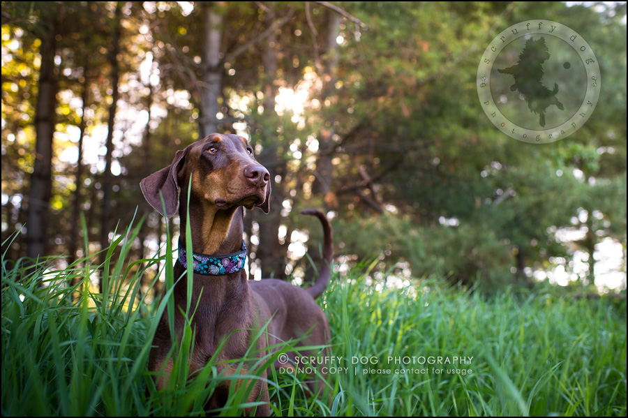 08_guelph_ontario_pet_photographer_best_dog_reese hunsberger-51