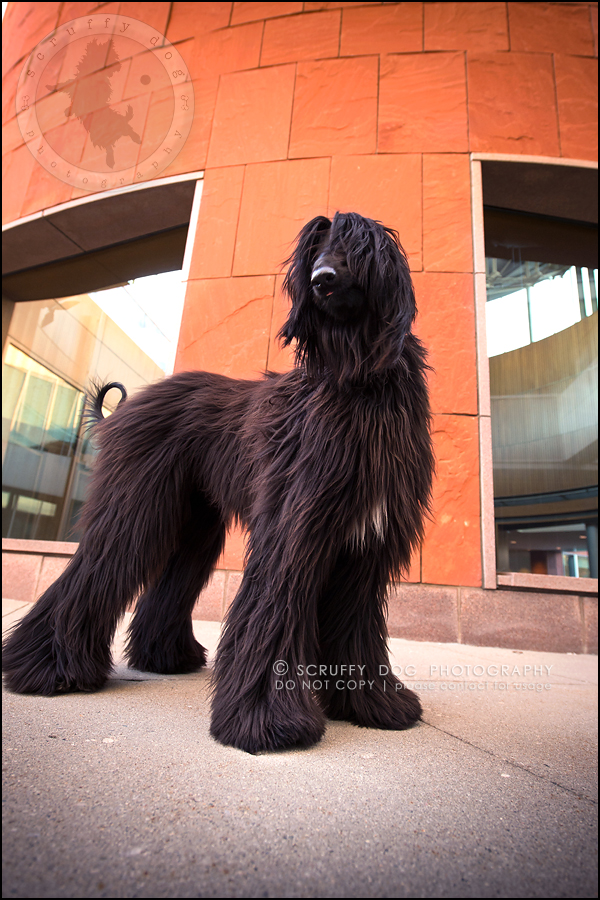 08_ontario_dog_stock_photography_dimitri willow steenblik-164