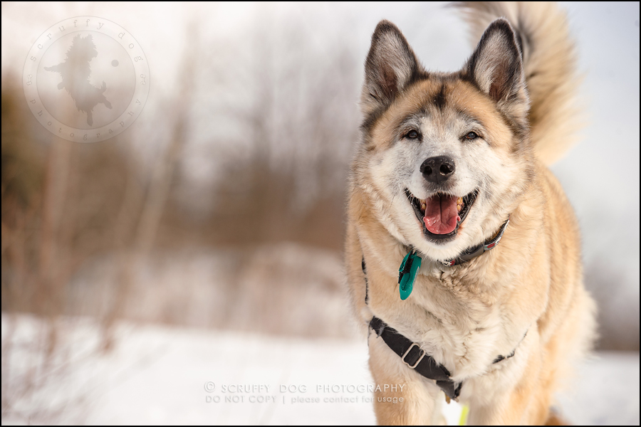 08_toronto_ontario_dog_stock_photography_grace zoe carr-143
