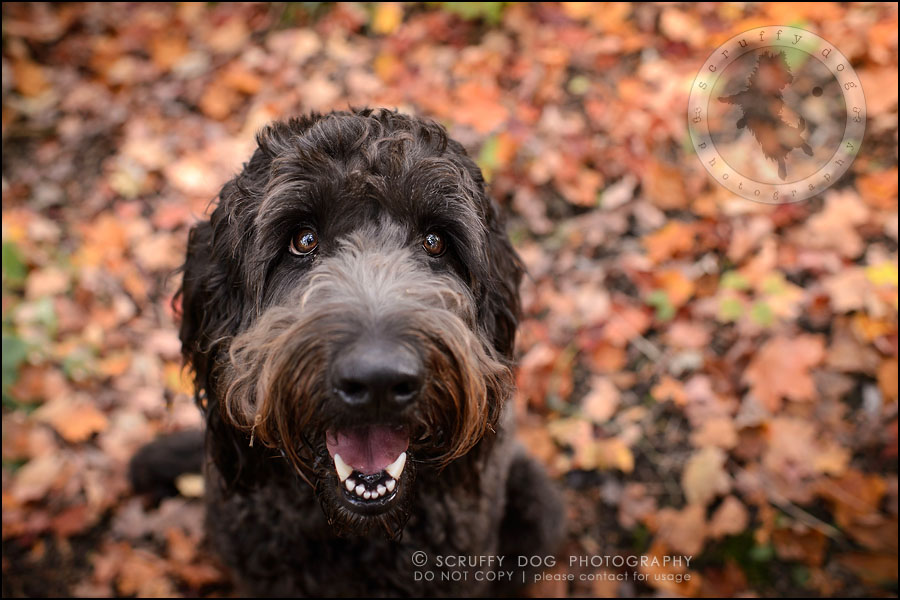 08_waterloo_ontario_best_pet_photographer_murphy odonovan-158