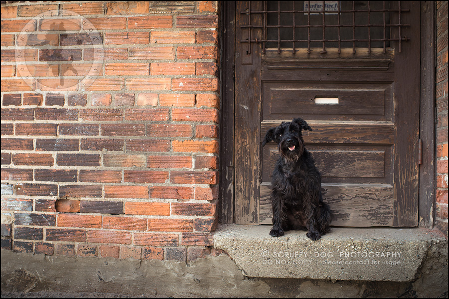 08toronto_ontario_dog_stock_photography_geordi jessie ladrillo-61