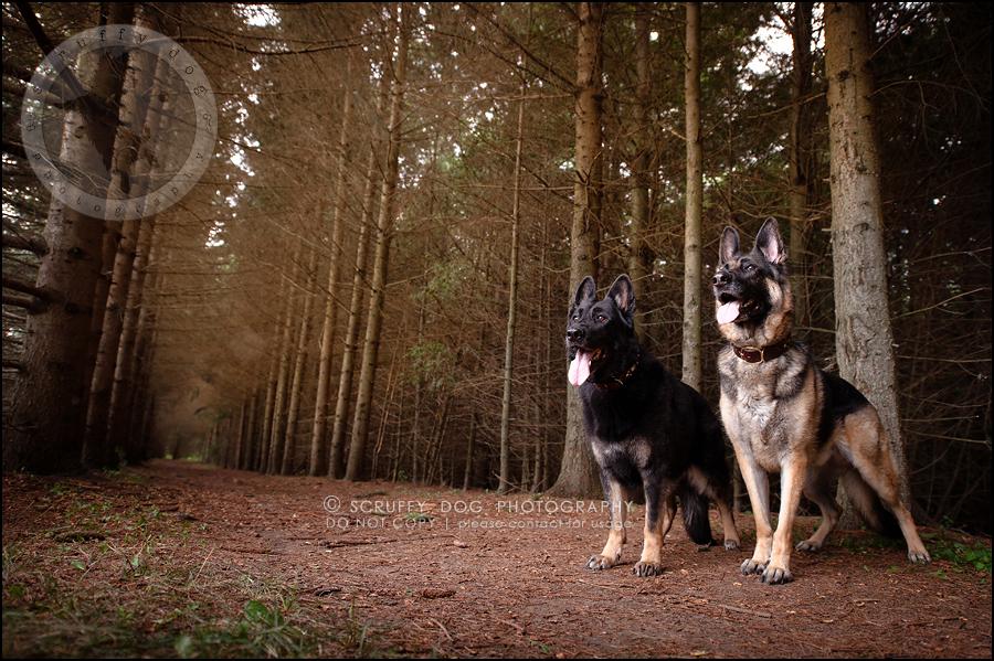 09-toronto-ontario-best-professional-pet-photographer-maya blitz-577