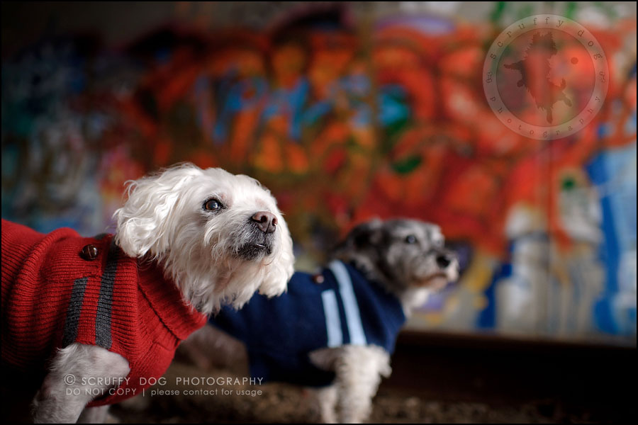 09-toronto-ontario-best-professional-pet-photographer-mika bobby worton-448