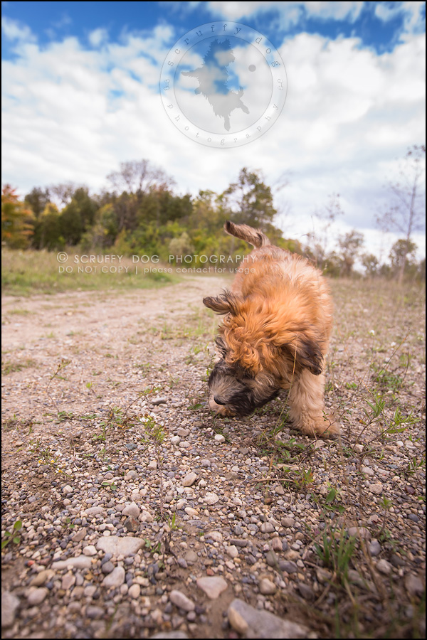 09-toronto-ontario-best-professional-pet-photographer-milford giza-104
