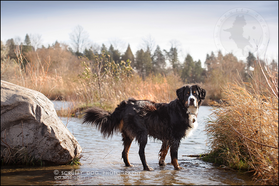 09-toronto-ontario-professional-dog-photographer-henry martha-22