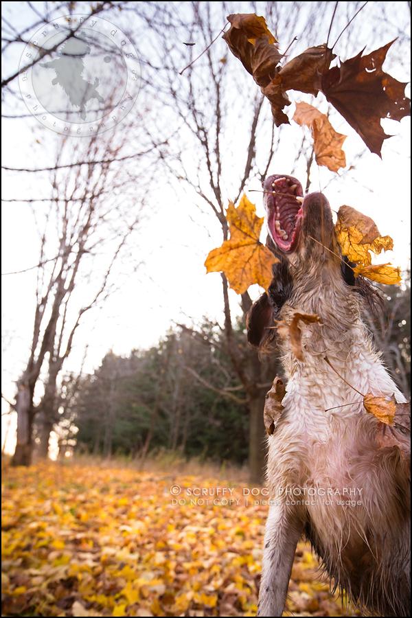 09-toronto-ontario-professional-pet-dog-photographer-jake boucher-1111