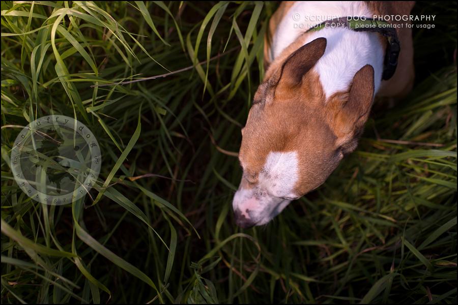 09-toronto-ontario-professional-pet-photographer-jade perry-113