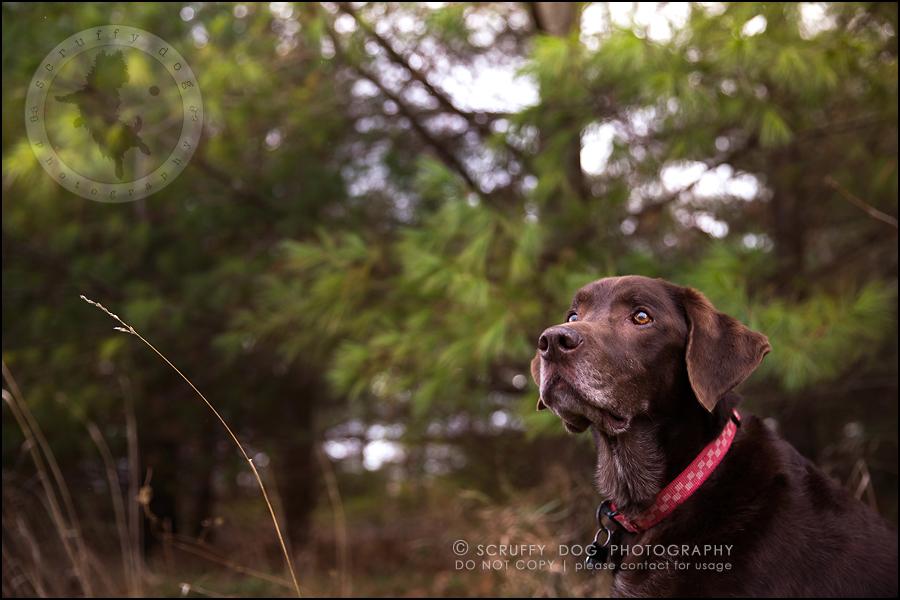 09-waterloo-ontario-best-professional-dog-photographer-max shoup-481