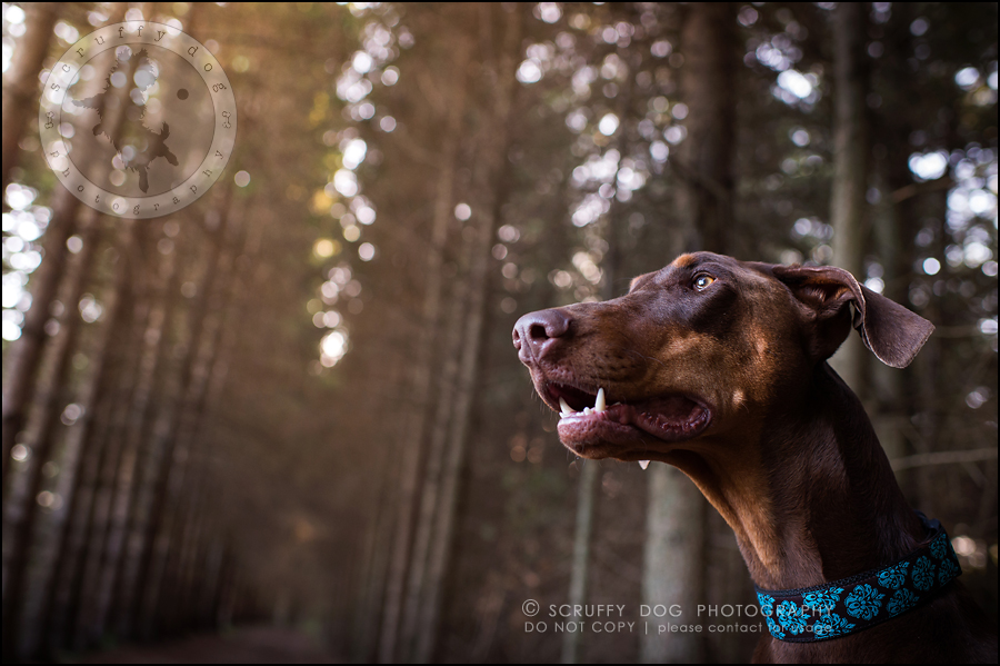09_guelph_ontario_pet_photographer_best_dog_reese hunsberger-309