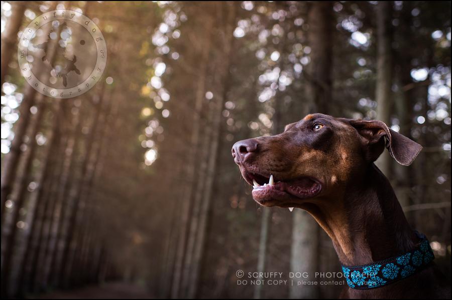 09_guelph_ontario_pet_photographer_best_dog_reese hunsberger-309