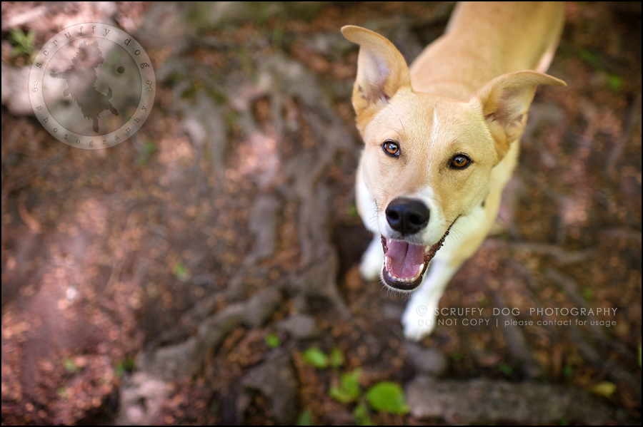 09_hamilton_ontario_pet_photographer_best_dog_remi kona pepper shaw-348